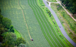 Green cultivated field, top view Royalty Free Stock Photo