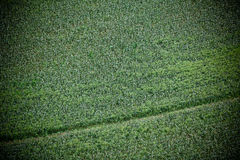 Green cultivated field, top view Stock Photo