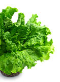 Green curly lettuce isolated Stock Photos