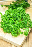 Green Curly Parsley Stock Image