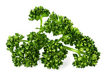 Green curly parsley Royalty Free Stock Photography