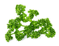 Green curly parsley Royalty Free Stock Images
