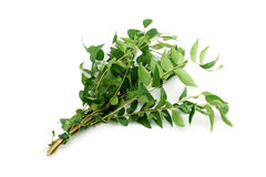 Green curry OR Sweet neem leaves Stock Photos