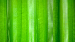 Green curtain Stock Images