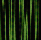 Green curtains Royalty Free Stock Image