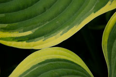 Green curve of leaves Stock Image