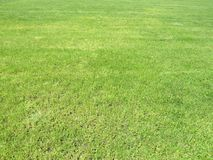 Green cut grass in spring. Football or soccer field green grass background. stock photo