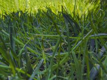 Green cut grass in spring. Sport playground. football royalty free stock photos