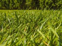 Green cut grass in spring. Sport playground. football stock photos