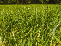 Green cut grass in spring. Sport playground. football royalty free stock image