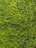 Green cut grass in spring. stock photo