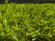 Green cut grass in spring. Sport playground. football stock photography