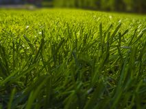 Green cut grass in spring. Sport playground. football royalty free stock photo