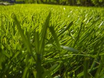 Green cut grass in spring. Sport playground. football stock photo