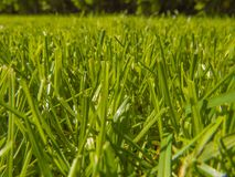 Green cut grass in spring. Sport playground. football stock images