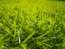 Green cut grass in spring. Sport playground. football stock image