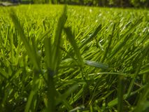 Green cut grass in spring. Sport playground. football royalty free stock images