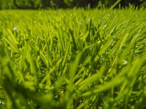 Green cut grass in spring. Sport playground. football royalty free stock photography