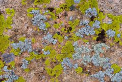 Green and cyan lichen on rock Royalty Free Stock Images