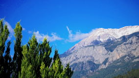 Green cypress tree on the mountains background stock video