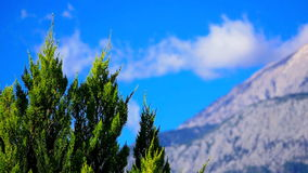 Green cypress tree on the mountains background stock video footage