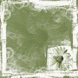 Green Daisy Background Royalty Free Stock Photo