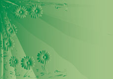 Green daisy background. Green graduate background with floral ornament Royalty Free Stock Photos