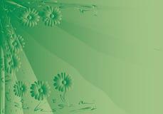 Green daisy background Royalty Free Stock Photos