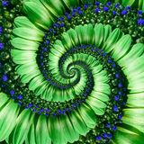 Green daisy flower spiral abstract fractal effect pattern background. Green navy flower spiral abstract pattern fractal. Incredibl. E flowers pattern round Stock Image