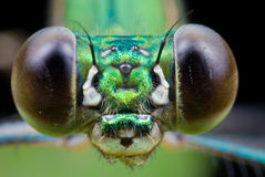 Green damselfly portrait Stock Photography