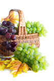 Green and dark grape in the basket Royalty Free Stock Photos