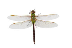 Green Darner Dragonfly Stock Photos