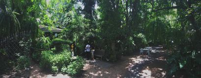 Green day. Restaurant in nakhonpatom thailand royalty free stock image