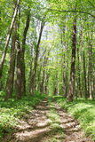 Green deciduous forest on a sunny day Stock Photo