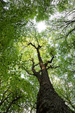 Green deciduous forest on a sunny day Stock Photos