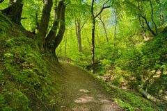 Green deciduous forest way. Mysterious nature. Trail by green deciduous forest. Mysterious way by nature reserve royalty free stock image