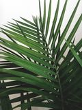 Green decor stock images