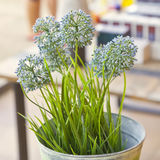 Green decoration plant Royalty Free Stock Image