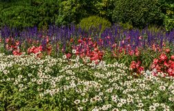 Green decorative garden Neutral landscape with beautiful flowers.  royalty free stock photo