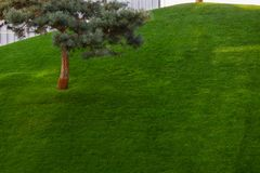 Green decorative garden. Neutral landscape with a green field. Landscape park. royalty free stock photo