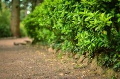 Green decorative Park bush in spring Royalty Free Stock Image
