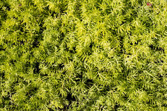 Green decorative plant background Royalty Free Stock Photo