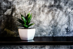 Green decorative plant near the cement wall , rustic home interi. Or decor with copy space Royalty Free Stock Image