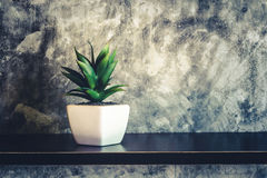 Green decorative plant near the cement wall , rustic home interi. Or decor with copy space Royalty Free Stock Photography