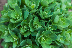Green decorative plants in the wild Stock Images