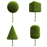Green decorative shrubs or trees. Royalty Free Stock Image