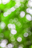 Green defocused lights useful as a background. Good for website designs or texture. Royalty Free Stock Images