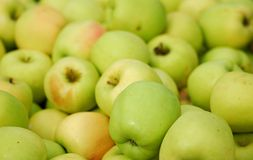 Green delicious apple Stock Images