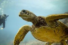 green den hawaianska havssköldpaddan arkivfoto