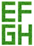 Green den isolerade gräsbokstaven Arkivbilder